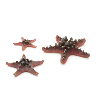 Pink biOrb Starfish Set | biOrb Accessories