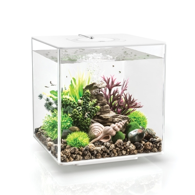 biOrb CUBE 30 Aquarium with MCR - 8 gallon White 54505 | biOrb Aquariums
