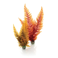 Image biOrb Fern Plant Pack Autumn