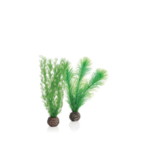 Image biOrb Green Feather Fern Plant Pack