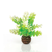 Image biOrb Green Caulerpa