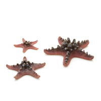 Image Pink biOrb Starfish Set